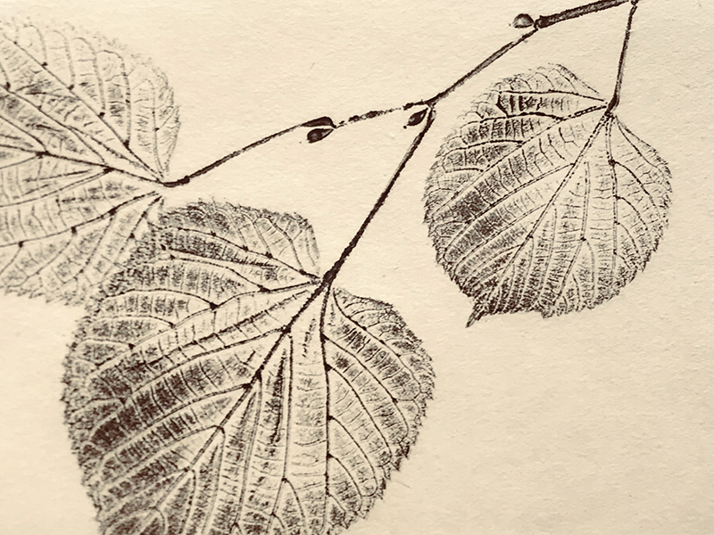 print of twig from linden tree