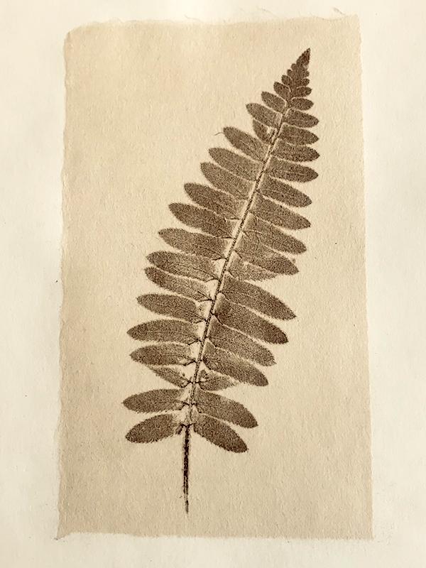 Asphaltum print of fern on japanese paper.